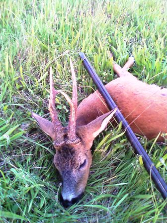 Danish roe buck 2009. Photo Kasper VJ.