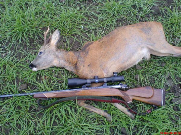 Roe buck hunting with rifle stick Photo K. Pedersen / skydestok.dk